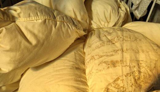 カビが生えた羽毛布団をリフォーム